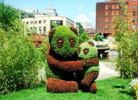 Топиарное искусство - виды растений и фото (59)