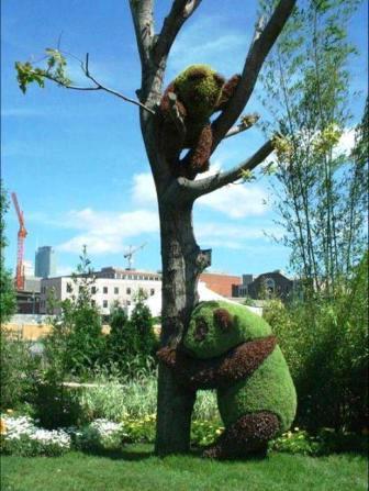 Топиарное искусство - виды растений и фото (60)