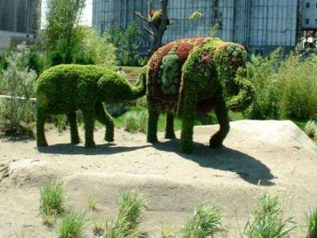 Топиарное искусство - виды растений и фото (61)