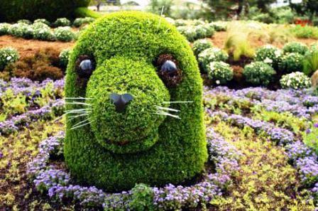 Топиарное искусство - виды растений и фото (62)