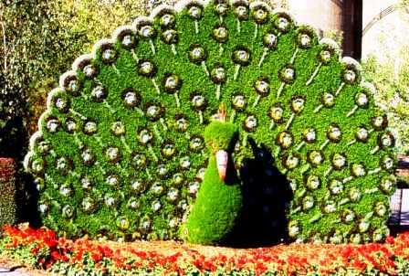 Топиарное искусство - виды растений и фото (64)