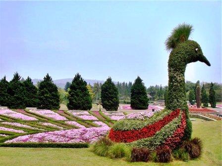 Топиарное искусство - виды растений и фото (67)