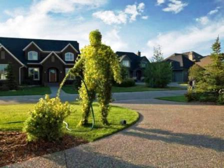 Топиарное искусство - виды растений и фото (1)