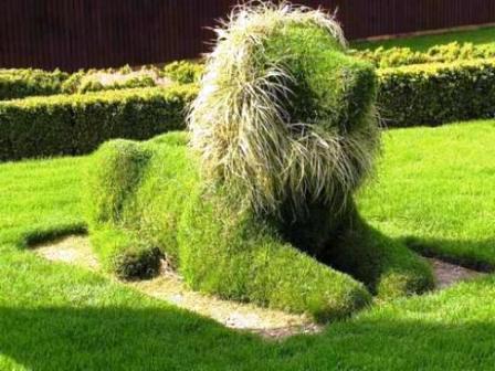 Топиарное искусство - виды растений и фото (9)