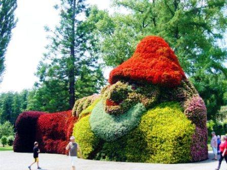Топиарное искусство - виды растений и фото (11)