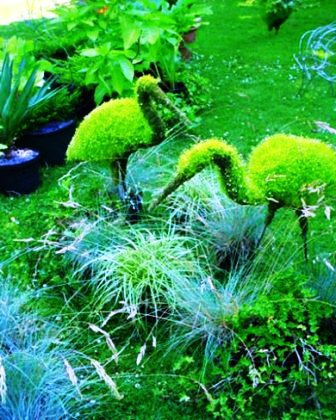 Топиарное искусство - виды растений и фото (12)