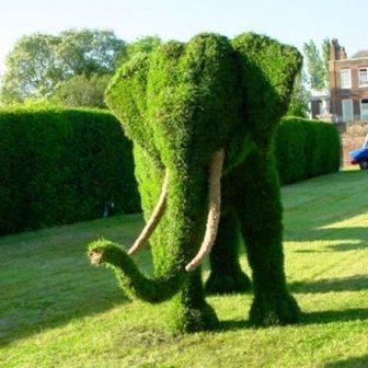 Топиарное искусство - виды растений и фото (18)