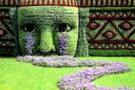 Топиарное искусство - виды растений и фото (21)