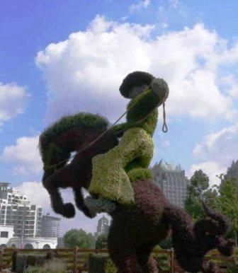 Топиарное искусство - виды растений и фото (23)