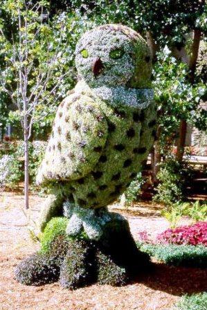 Топиарное искусство - виды растений и фото (25)