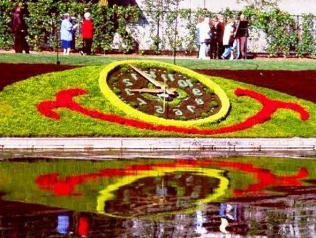 Топиарное искусство - виды растений и фото (26)