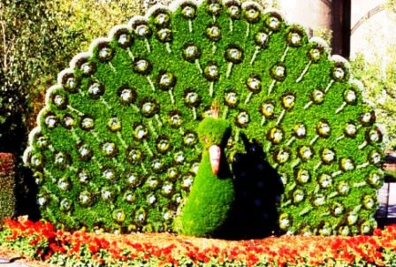 Топиарное искусство - виды растений и фото (27)