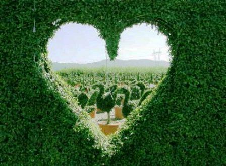 Топиарное искусство - виды растений и фото (28)
