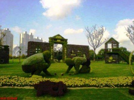 Топиарное искусство - виды растений и фото (30)