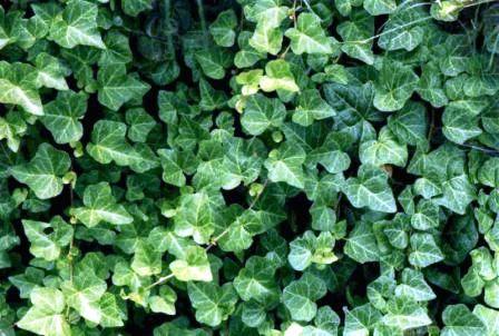 Сад здоровья (1)