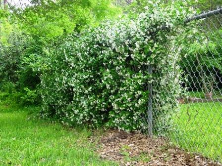 Сад здоровья (3)
