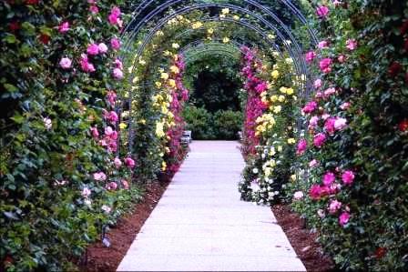 Сад здоровья (4)
