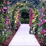 Сад здоровья3