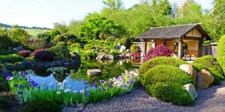 Сад здоровья (6)