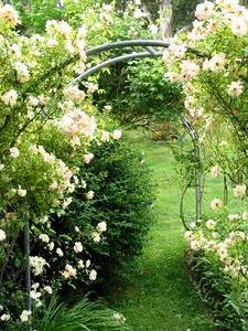 Сад здоровья (7)