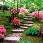 Сад любви