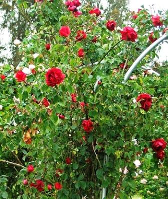Сад любви (7)