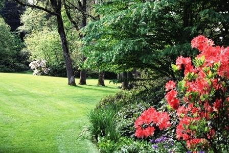 Чем удобрять газон (1)