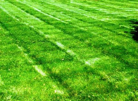 Чем удобрять газон (2)