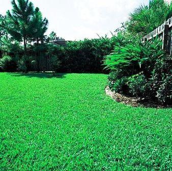 Чем удобрять газон (3)