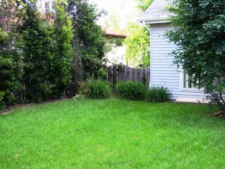 Чем удобрять газон (6)