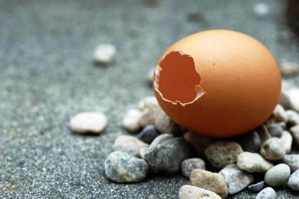 Горшок из яичной скорлупы (4)