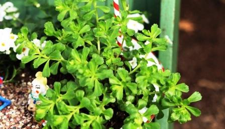 Как украсить свой двор (6)