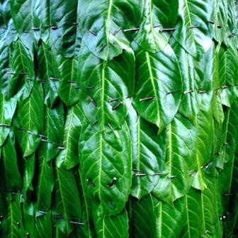 Одежда из растений для декора участка (14)