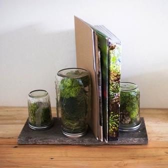 Растения в банке (1)