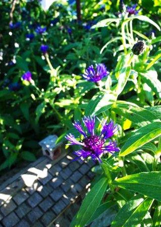 Идеи для маленького сада (10)
