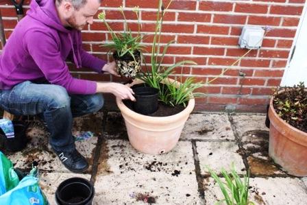 Пересадка домашних растений (3)