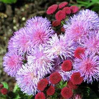 Пересадка домашних растений (5)