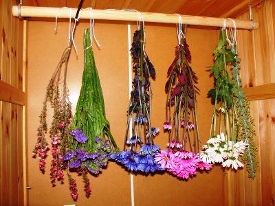 сушка растений3