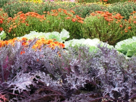 Cушка растений - декор (15)