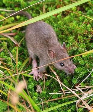 Борьба с мышами на даче (1)