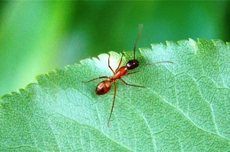 Как избавиться от муравьев на даче (3)