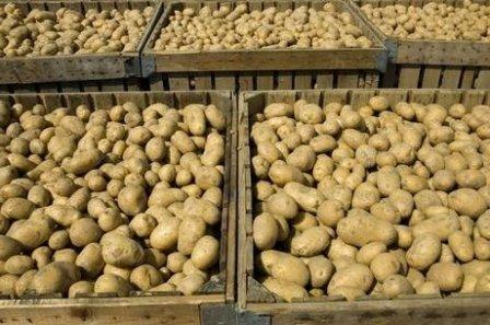 Как хранить урожай (2)