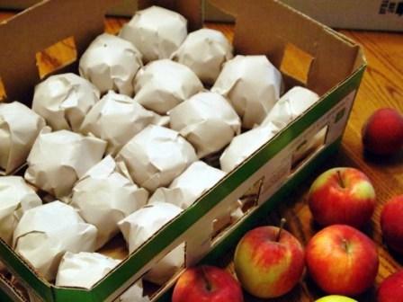 Как хранить яблоки (4)