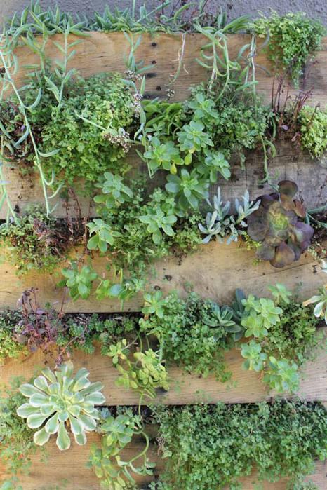 растения +для вертикального озеленения