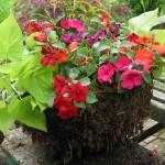 Подвесное кашпо для цветов — украшаем сад своими руками