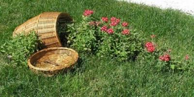 Оформление клумб и цветников на даче своими руками - Цветочный ручей