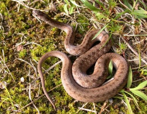Змеи на даче (2)