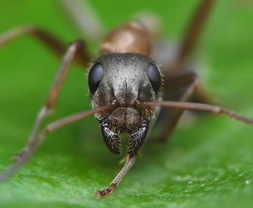 Как избавиться от муравьев на даче (4)