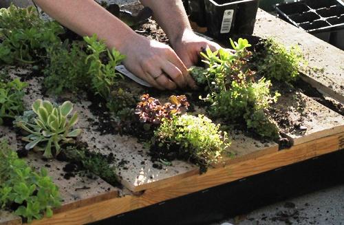 Зимний сад в квартире - вертикальный сад (4)