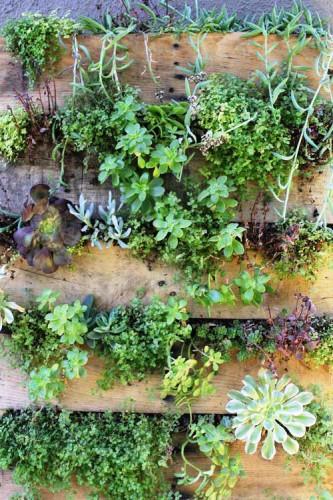 Зимний сад в квартире - вертикальный сад (2)